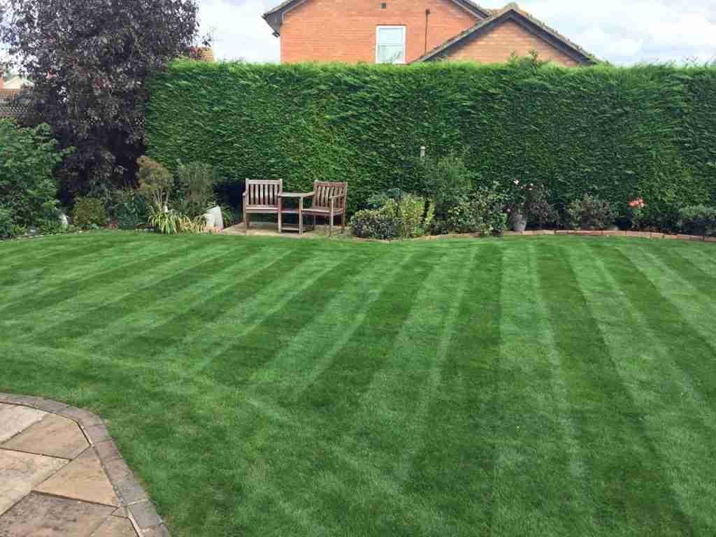 a small dark green lawn with stripes