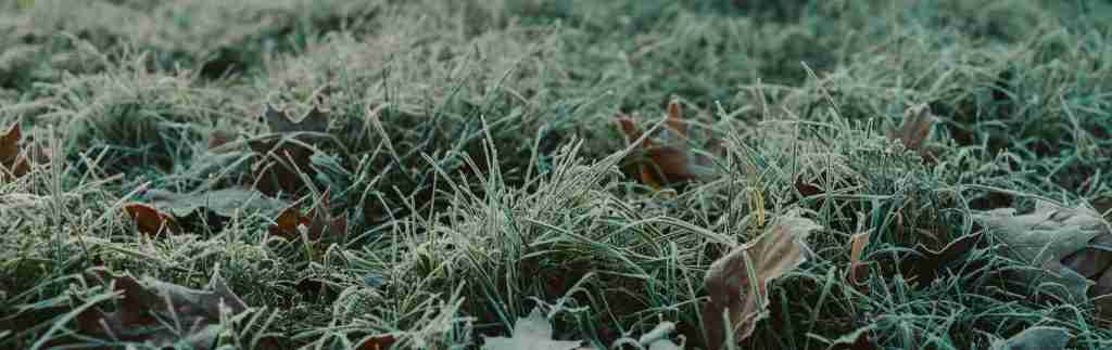 Why You Shouldn't Worry About a Frosty Lawn