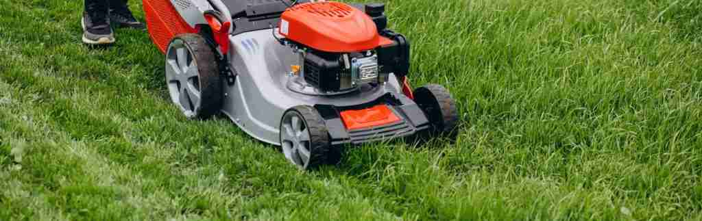 When and How Often Should You Cut Your Grass?