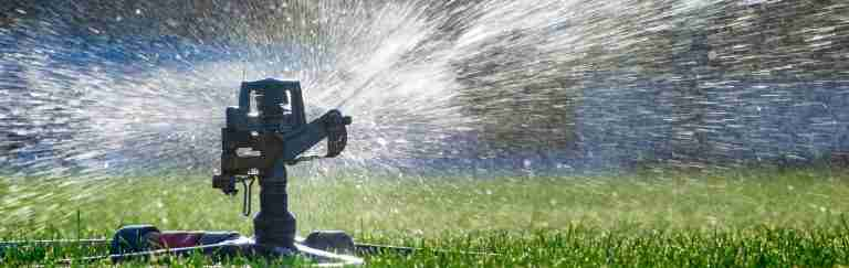 Should You Water Your Lawn? If so, How Often?