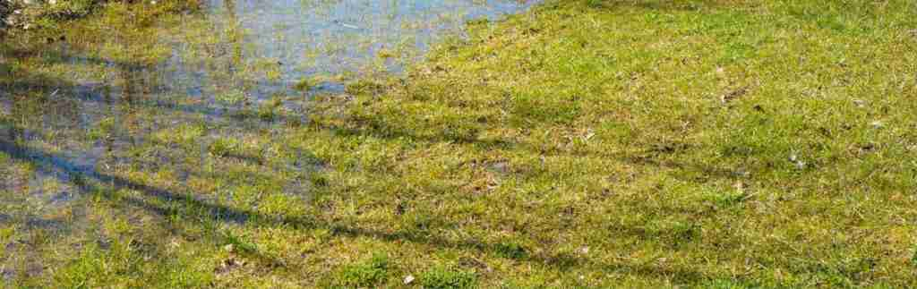 Solution to a Waterlogged Garden: How to Fix & Improve Your Soggy Lawn