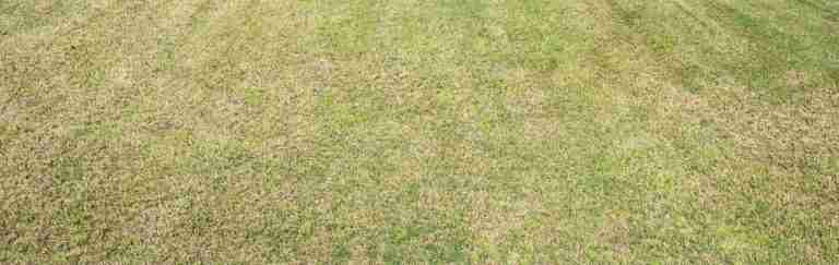 How Short Should You Cut Your Grass and Why Too Short is a Disaster